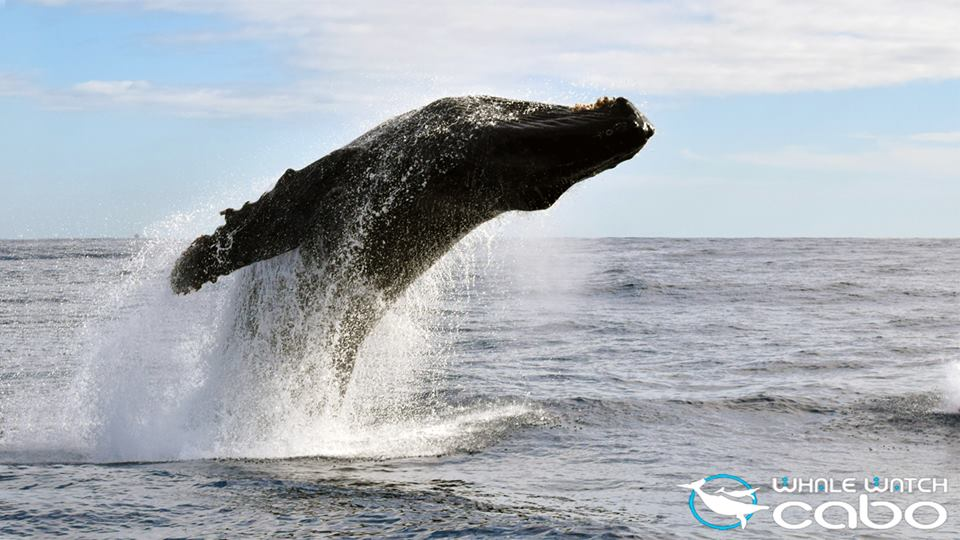 Photo: Whale Watch Cabo