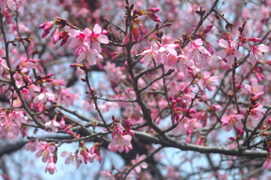 Courtesy Brooklyn Botanic Garden
